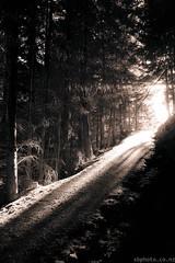 Roaring Meg Tree forest