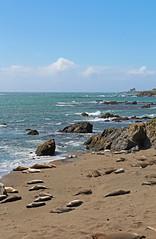 Elephant Seal Beach 1 (SamLleva) Tags: california beach mammal coast sand pacific highway1 seal hearstcastle pup cambria elephantseal molting