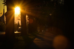 (Le Robson) Tags: road city trip trees sunset sun church bicycle outdoor path
