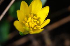 DSC07739 (gabriella.lavati) Tags: wild macro nature vintage spring sony manual f56 pilis 55mmf45 mikars dmrkapu nex5