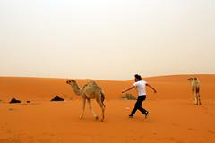 Francis laisse donc tranquille ces pauves betes (Dlirante bestiole [la posie des goupils]) Tags: sand young middleeast camel saudiarabia dsert francophonie runbabyrun arabie enmarge