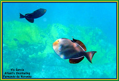 Atlantic Snorkeling (vicbrasil) Tags: brasil atlantic snorkeling fernandodenoronha december2011
