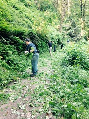 Forest Park Conservancy Trail Clearing 3