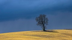 Stormy Light...... (klythawk) Tags: blue shadow brown sunlight black field yellow sony april showers nottinghamshire darkclouds lonelytree stormyweather 70200mm maplebeck klythawk a7ll