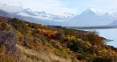 On the banks of Lake Pukaki (setoboonhong) Tags: new travel sunlight lake snow mountains nature water grass landscape island mt outdoor south ngc cook zealand ferns bushes pukaki