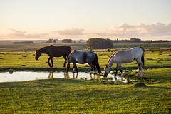 Horses (c.cabrera66) Tags: horses horse beautiful landscape caballo caballos