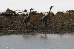 Police Outpost PP (Alberta Parks) Tags: sky nature water outdoors cranes enjoy value discover