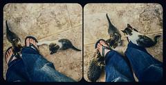 Cheeky (Melissa Maples) Tags: cameraphone woman cats selfportrait feet me apple animals turkey square spring shoes asia babies trkiye kittens 11 melissa antalya kitties flipflops maples iphone  iphone6