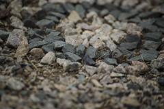 Habitat (consolecadet) Tags: nature woods rocks belmont mandala habitat natureart belmontma earthart massaudubon