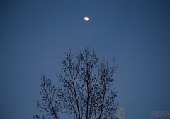 moon (1 of 1) (tamimabulhassan) Tags: sunset moon beach couple shoreline deathstar