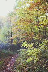 Fall 2015 (cherrygurl) Tags: trees fall colors woods canoneos6d october102015
