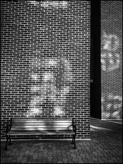 Reflection Bench-BW (Firery Broome) Tags: wood blackandwhite bw sunlight window monochrome architecture reflections bench morninglight blackwhite bricks cellphone brickwall manmade delaware 365 newark phonephoto apps pavers iphone everydayobject ipad universityofdelaware woodenbench windowreflections alienskin blackandwhitearchitecture phoneography monochromemonday iphoneography benchmonday exposurex ipaddarkroom snapseed iphone5s