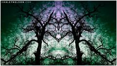 A New Perception (kaleynelson) Tags: trees abstract tree nature landscape meditate symmetry mirrored symmetric symmetrical meditation psychedelic spiritual chakra chakras alexgrey sacredgeometry kaleynelson