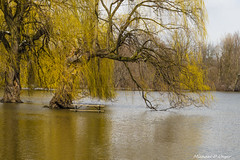 Riverside Park Flood 2016-3.jpg (scorpio71gr) Tags: unitedstates michigan grandrapids