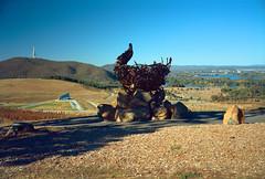 Frame 1.jpg (njcull) Tags: 120 film kodak australia 6x9 canberra polarizer monopod nationalarboretum testroll australiancapitalterritory c41 westoncreek kodakektar100 ektar100 fujigw690ii colorperfect