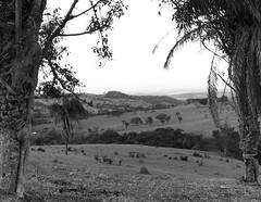 Paisagem (7095) (Jorge Belim) Tags: flora pb paisagem 1022 canoneos50d