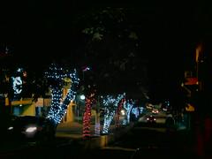 Natal (erivaniaery) Tags: luz natal avenida luzes enfeites rvores iuna