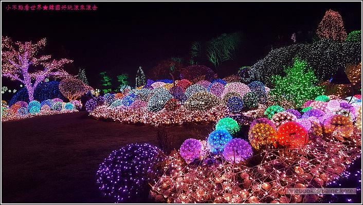 晨靜樹木園 五色星光庭園展 (9).jpg