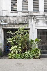 (AsianInsights) Tags: road city plants house garden gate asia southeastasia yangon burma pots fungus myanmar innercity mold humidity rangoon 2016 citygarden myanma february2016