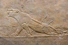 DSCF7008.jpg (Darren and Brad) Tags: england london thebritishmuseum assyria assyrian sportofkings ashurbanipal lionhunting royallionhunts