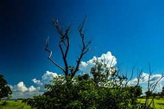 Bush at Mandorah (betadecay2000) Tags: wood trees tree green beach nature grass bush woods forrest outdoor timber natur pflanze himmel australia darwin gras australien grn blau northern wald bume baum busch territory northernterritory australie idylle urwald austral waelder mandorah wildnis eukalyptus wlder ozeanien australischer pflanen