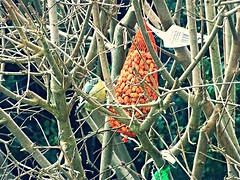 DSC02024 (1) (Enrico Luigi Delponte) Tags: birds sony vogels uccelli sonyfuncamera