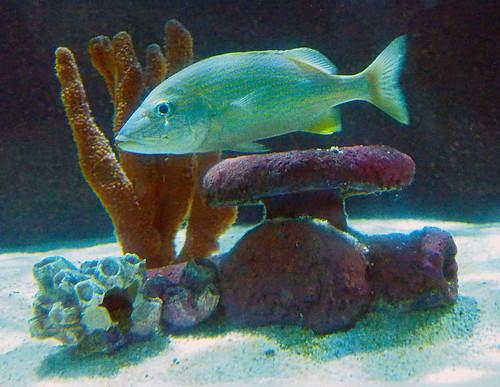 Greater Cleveland Aquarium 01-22-2015 - Unknown Fish 30