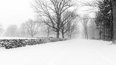 elmwood road (Homemade) Tags: winter snow ny newyork westchestercounty southsalem lewisboro elmwoodroad sonydscrx100 winterstormjonas