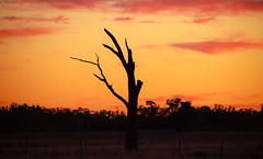 corowa sunset (robertmilesdesign) Tags: landscape sunsets australia australianlandscape