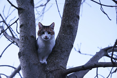 DSC09308 (weekend_vagabond) Tags: city west tree up cat evening high feline afternoon bradford yorkshire