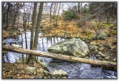 Steam with fallen tree (jsleighton) Tags: park winter tree leaves rock landscape stream bearmountain fallen glacial