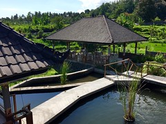 Bali (another_noone) Tags: bali indonesia tirta gangga
