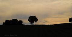 Sierra de los Pedroches -1- Sunset (Rafael Vila) Tags: sunset tree silhouette landscape arbol paisaje andalucia campo silueta pedroches