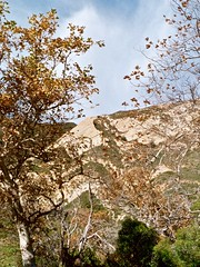 California Hills (Seleusleaf) Tags: blue trees light sky clouds cliffs sycamore