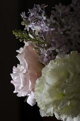 LIGHT IS EVERYTHING (PHOTOGRAPHYSUAT) Tags: pink plant black flower green yellow dark lens table prime nikon colorful dof purple top background explore framing shining lightbox inexplore d7000 sb700