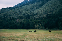 Horses (irinachobotova) Tags: life road new trip travel blue trees summer house mountain holiday mountains tree cute green love home nature beautiful beauty animal animals forest landscape fun happy photography photo nice nikon day russia top live happiness august adventure explore romantic mylove 2015 beautyshoots nikond5100