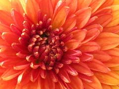 Macro Mum (teresamp2014) Tags: stilllife naturepics excellentsflowers thebestofmimamorsgroups