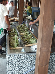 Fresh wasabi in Azumino, Japan, 2014 (mrshibuyaboy67) Tags: green japan eat wasabi azumino