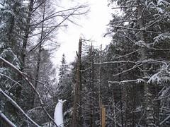 Flight path through the trees (TSBCanada) Tags: tsb accident aircraft chicoutimi a09q0203