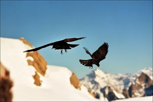 Alpine birds