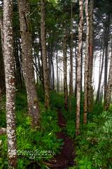 Misty Woods at Mt. Mitchell (Deb Scannell) Tags: trees landscape portfolio blueridgeparkway mtmitchell macroshots fineartcollectionwork