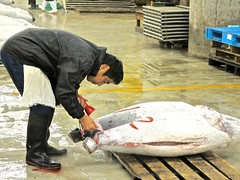 How much do I want to pay for this? (minimi007) Tags: fish japan canon tokyo market auction tsukiji tuna fishmarket tsukijifishmarket canonpowershotg11