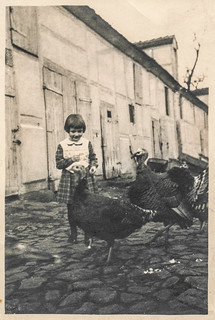 Little girl and turkeys