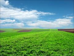 Green field (Katarina 2353) Tags: film field landscape spring nikon serbia agriculture vojvodina srbija katarinastefanovic katarina2353