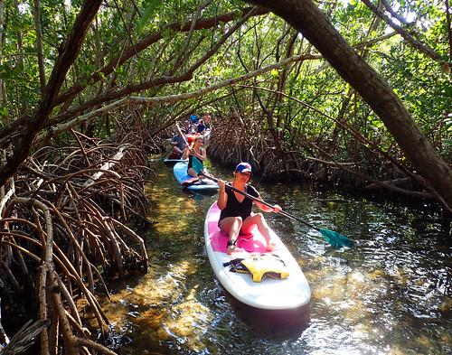 3_5_16 Kayak Paddleboard Tour Sarasota FL 15