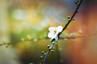 An alone flower