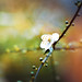 An+alone+flower