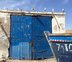 Essaouira (yaelgasnier) Tags: travel color bird colors birds square couleurs colorfull bleu morocco squareformat maroc marrakech marruecos essaouira marokko oiseaux  wonderfulplaces   shotaward vsco beautifuldestinations iphoneography instagramapp instamorocco igworldclub iphone6plus marocphotonet