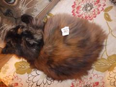 afsaneh in vendita :P (en-ri) Tags: cat fujifilm miao letto gatta etichetta afsaneh