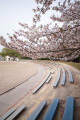 IMG_9153 (BrellLi) Tags: flora nagoya  cherryblossom  sigma1224mm       canon6d